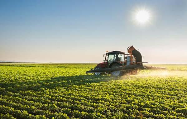 Agronegócio freia impacto nos pequenos negócios do Oeste de Santa Catarina